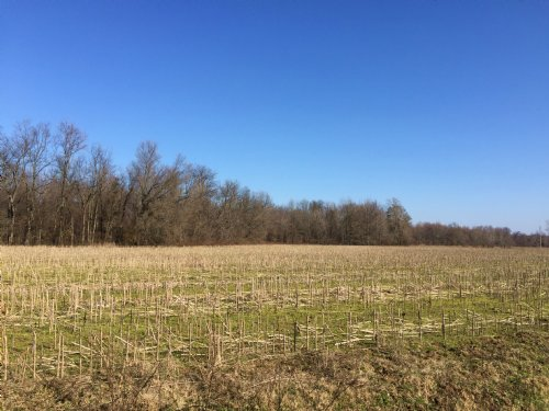 Farm And Timber For Sale : Marvell : Phillips County : Arkansas