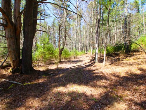 18 Acres Prime Hunting Parcel : Benton : Columbia County : Pennsylvania