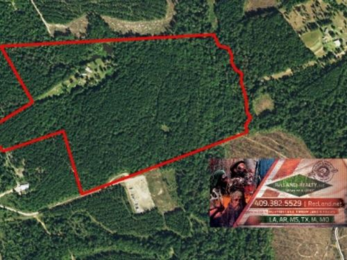 68.8 Ac - Timberland Hunting Tract : Jasper : Texas