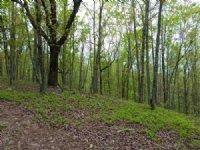 32+/- Acres Mature Hardwoods : Goodwater : Coosa County : Alabama