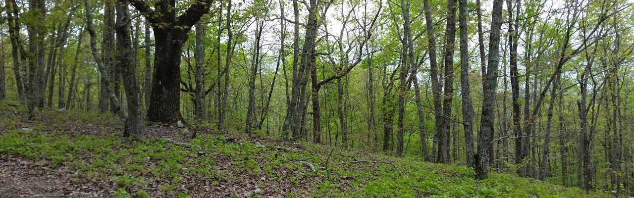 32+/- Acres Mature Hardwoods : Goodwater : Coosa County : Alabama
