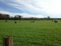 25 +/- Ac, Rolling Pasture, Rydal
