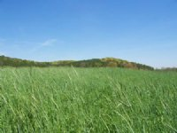 30.63 +/- Acres, Pasture And Creek