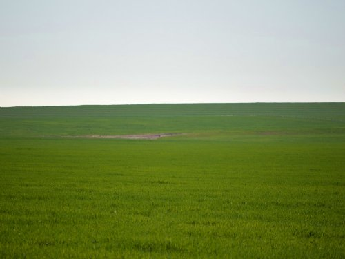 Dry Farmland : Lamar : Prowers County : Colorado