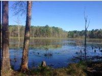 88.26 Acres Fishing Land