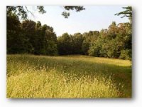 193.64 Acres Fishing Land, Hunting