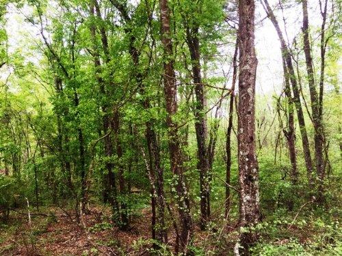 Wagener Trail Tract : Wagener : Aiken County : South Carolina