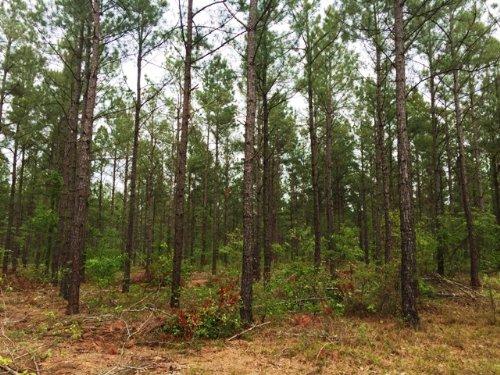 Apple Jack Road Tract : New Holland : Aiken County : South Carolina