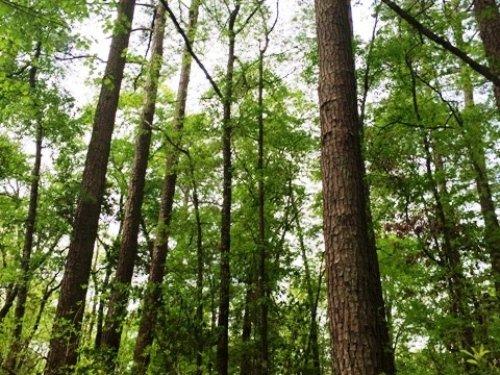North Fork Edisto River Tract : Wagener : Aiken County : South Carolina