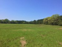 80.00 Acres Hunting Land, Pasture