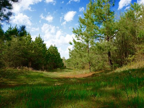 Reduced, Timber Investment Bienvill : Bienville : Louisiana