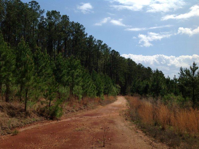 816+/- Ac Near Maplesville : Maplesville : Chilton County : Alabama