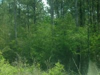 940 Acres Of Commercial Property
