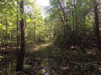 40 Ac Hunting / Timber Tract
