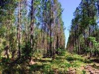 Jericho Woods Property : Adams Run : Charleston County : South Carolina