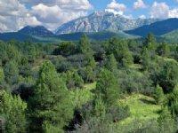 Arizona's Best Selection Of Land : Saint Johns : Apache County : Arizona