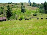 Brenner Cattle Ranch