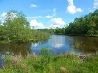 93.00 Acres Hunting Land, Timber