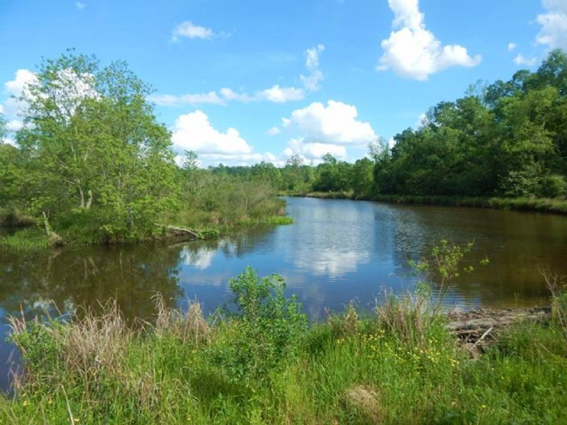 Acres hunting land timber farm for sale jayess for Fishing camps for sale in mississippi