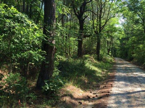 Timber And Pond : Sharon : Taliaferro County : Georgia
