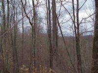 125 Acre Timber Tract