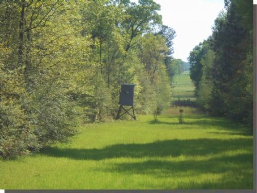 44 Acres In Marion County : Foxworth : Marion County : Mississippi