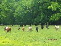 Creek-side Cattle Farm