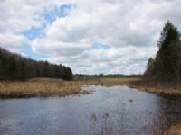 Land On Little River 5 Acres