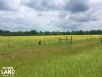 Aliceville Cattle Farm