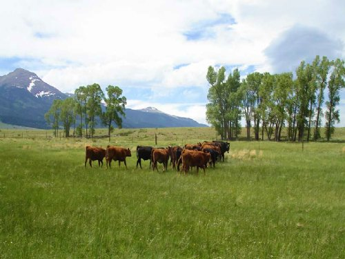 Ula Meadows Ranch : Westcliffe : Custer County : Colorado