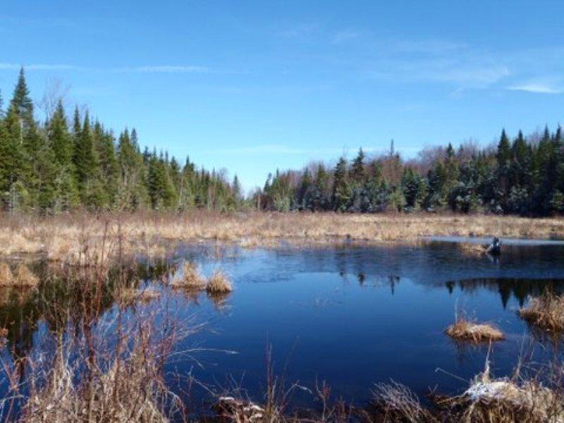 Pleasant Brook Forest : Brandon : Franklin County : New York