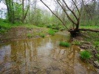 Dutch Creek Rd - 98 Acres