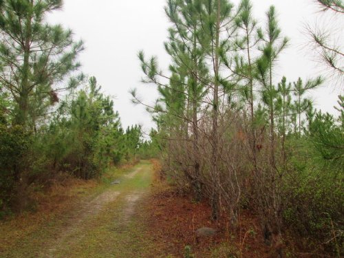 137 Acres In Great Location : Waycross : Ware County : Georgia