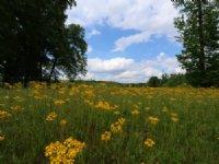 Wolf Creek Farms - 48+/- Acres