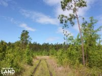 Wooded Recreational Opportunity