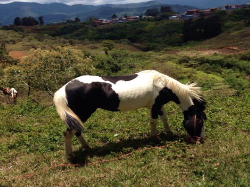 Borders Natural Forest-9 Acre Ranch : Tucurrique : Costa Rica