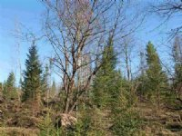 Lot 2 Holli Blue Rd., Mls# 1093797 : Michigamme : Marquette County : Michigan