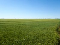 6/8 Auction: 175.9 Acres Of Croplan