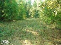 Sipsey Timber Investment : Buhl : Tuscaloosa County : Alabama