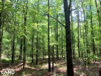 Summerton Timber & Recreation Tract