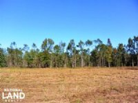 Large Acre Homesite