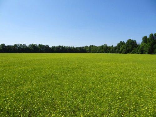 Price Reduced 61 Ml Acres : Lafe : Greene County : Arkansas