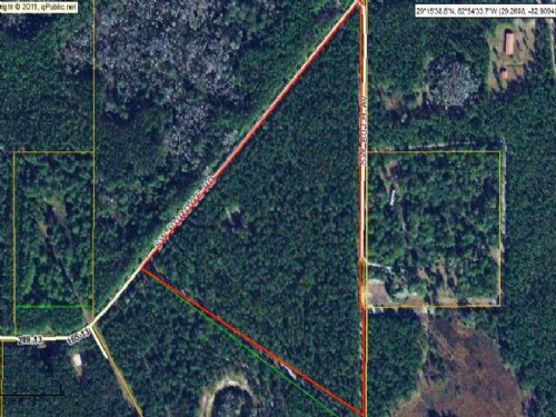 21.75 Acres In Planted Pine : Cedar Key : Levy County : Florida