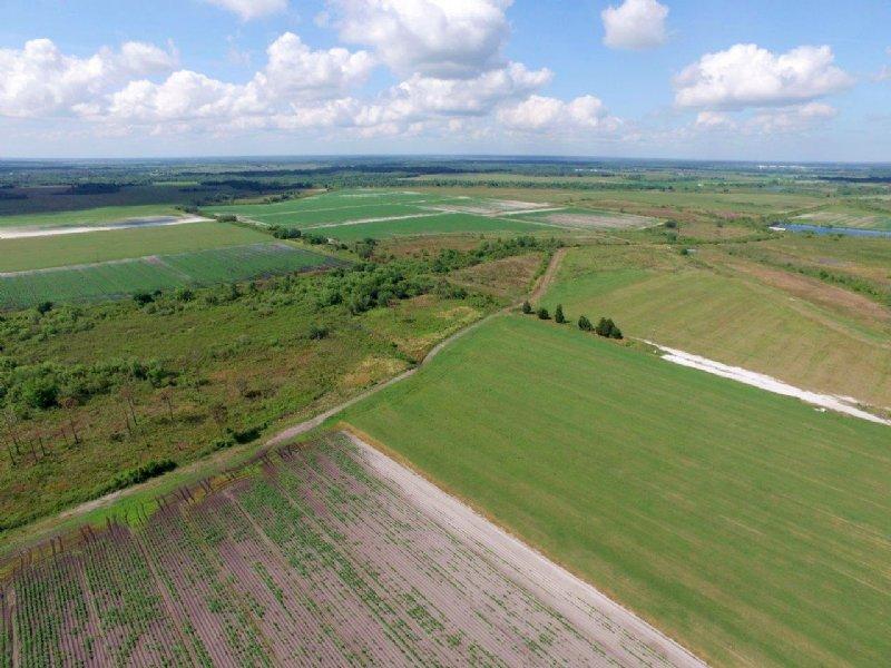 Pacific Company Farmland : Myakka City : Manatee County : Florida