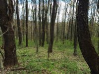 20 Acres Near Ellicottville Timber