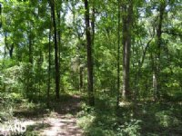 325 Acres Timberland And Deer Hunti