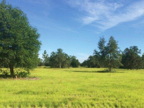 Tracy Branch Ranch : Kenansville : Osceola County : Florida