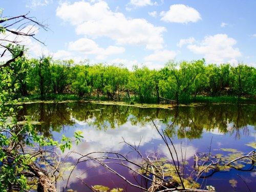 319 Acres / 29985 : Stamford : Jones County : Texas