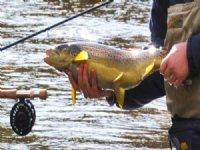 6 Ac 403' Salmon Riverbank $119,900 : Altmar : Oswego County : New York