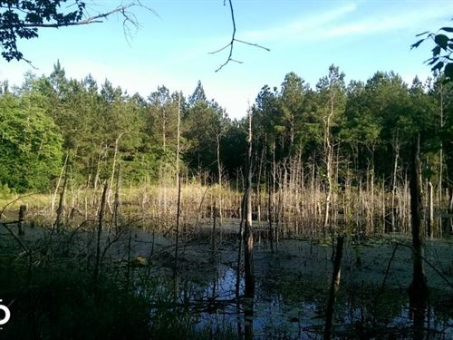 The Brown Road Fish Pond Tract : Fruitdale : Washington County : Alabama